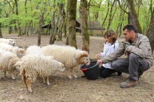 mouton avec animalier et enfant à zoodyssée