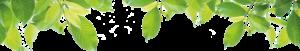 feuilles forêt de Chizé, parc animalier à Zoodyssée