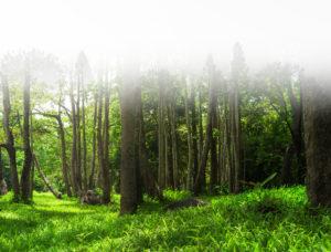 forêt de Chizé, parc animalier à Zoodyssée