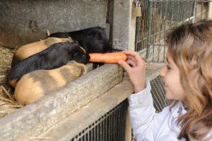 enfant et animal à zoodyssée