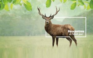 le cerf : un animal star de Zoodyssée