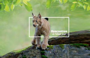 mobile lynx zoodyssée parc animalier