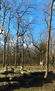 forêt de Chizé zoodyssée
