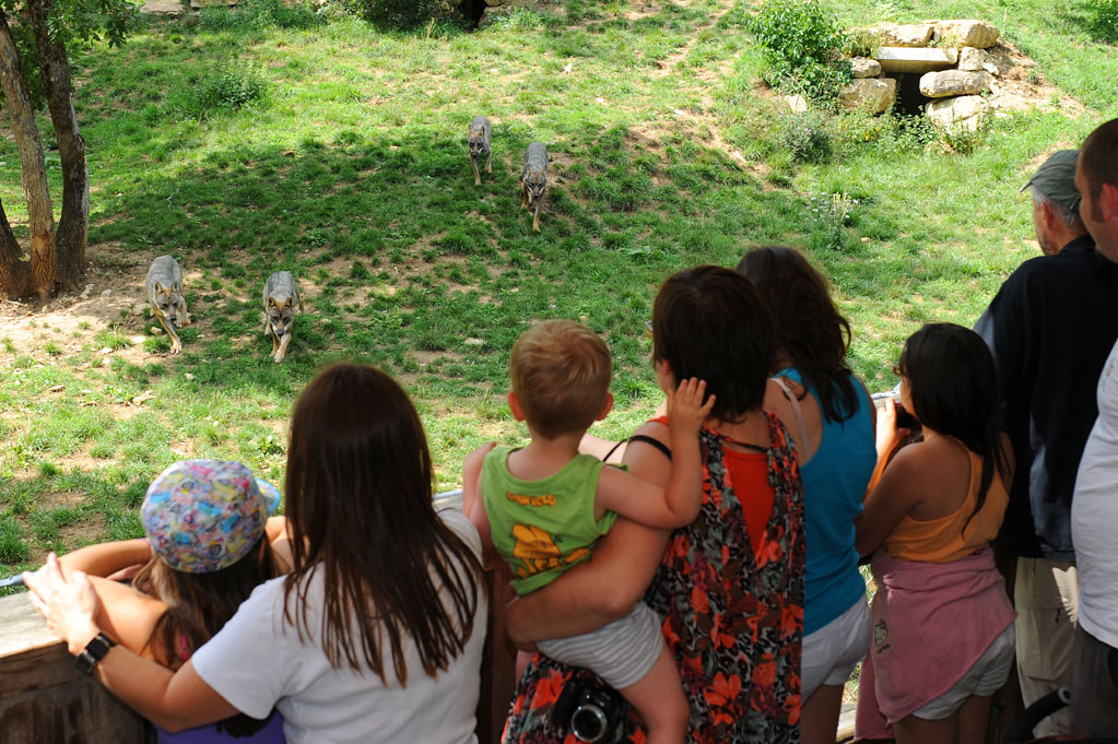 famille et loups à Zoodyssée