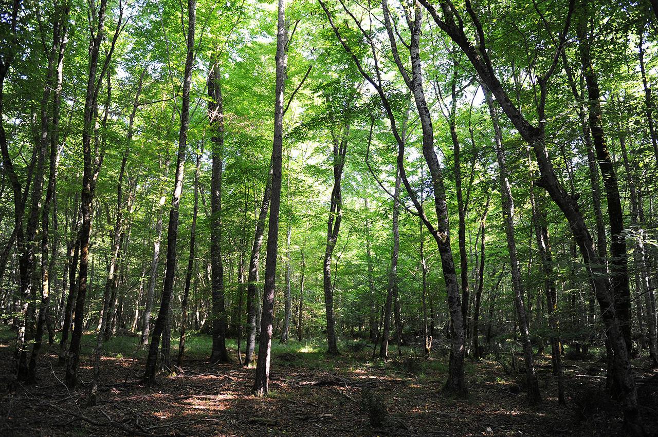 la forêt de Chizé