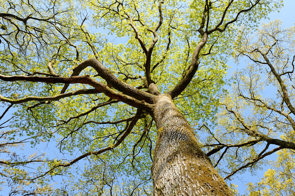 arbres forêt chizé